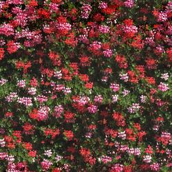 mtex_23014, Natur, Have, Architektur, CAD, Textur, Tiles, kostenlos, free, Nature, xyz mtextur