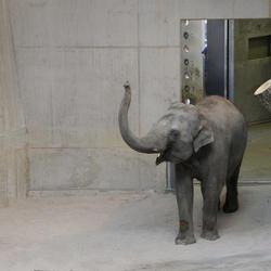 Elefantenpark im Zürcher Zoo, Holcim, Markus Schietsch Architekten GmbH, Zürich, by mtextur
